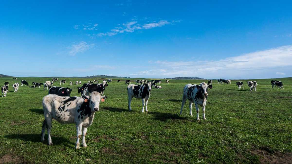 How Solar Energy is Shaping a More Sustainable Future For Livestock Farming
